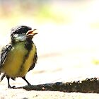 Great tit, juvenile by Majnu