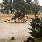 Snow in the Pampas.... by DCFotos