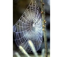 What a tangled web we weave.............. Photographic Print