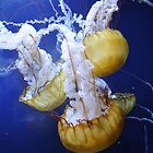 sea monsters by titabia