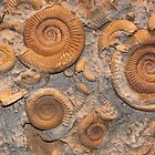 Ammonoids at the Museum of the Earth, NY by Alice Kahn