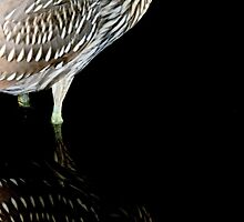 Baby Black Crowned Night Heron Reflection by Paulette1021
