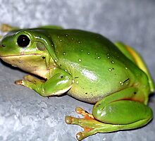 Green Tree Frog by EnviroKey