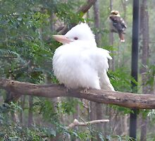 Kookaburra - White form by EnviroKey