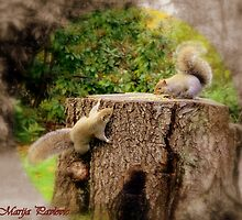 funy squirrels  by marija pavlovic