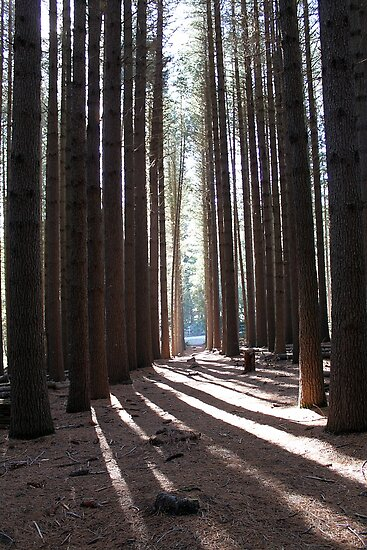 Sugar Pine Walk by EnviroKey