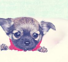 Happiness is sweet puppy breath.  by MayJ