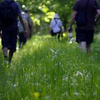 Hiking in Kopacki Rit - Croatia by jjshoots