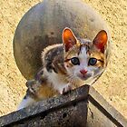"""""""Kitty on the roof"""", tortoiseshell cat on roof . by Mary Taylor"""