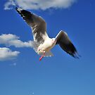 One legged seagull by Bryan Cossart