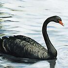 Black Swan by Charlotte Yealey