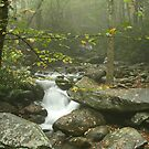Smoky Mountain Stream by kinz4photo