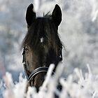 Snowhorse by avdw