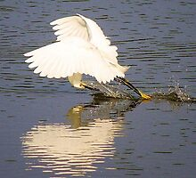 Snowy Egret with a Heart Reflection by Paulette1021