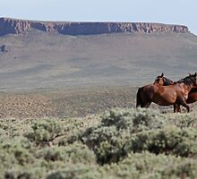 Wild Mares Social Grooming at Pilot Butte by A.M. Ruttle