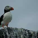 Puffin by nathanw08