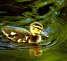 Baby Duck  by LudaNayvelt