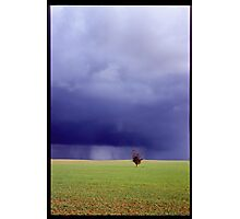 Coming Rain, Mallee Photographic Print