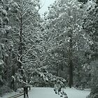 Snowing in Mt Disappointment Forest by saltbushbill