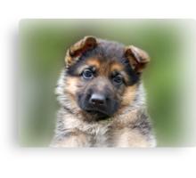 Puppy Portrait Canvas Print