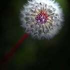 just dandy by Wendie