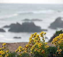 Yellow Flowers above El' Matador by tom j deters