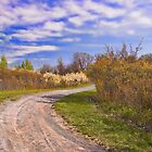 Vernal Trail by sundawg7