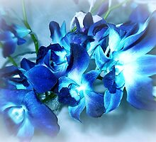Singapore Orchids- in Blue by EdsMum