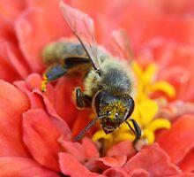 Bee Pink by Sarah Jennings