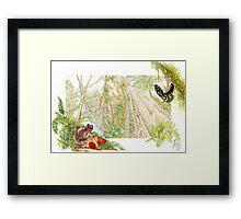 McDonald's Frog (watercolour) Framed Print