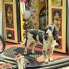 Boat Dog - Springer Spaniel by SimplyScene