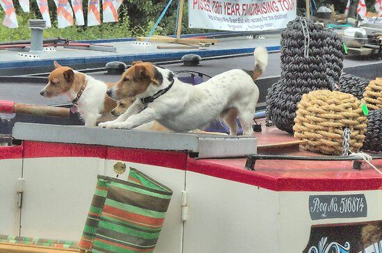 Boat Dogs by SimplyScene