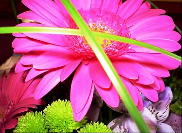 Gerbera in Bouquet by EdsMum