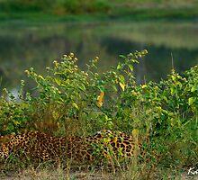 Mixo Sleeping - Djuma Game Reserve by KathrynLouw