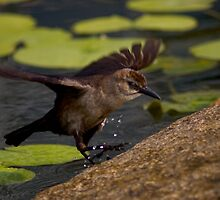 A Female Boat-tailed Grackle by Regenia Brabham