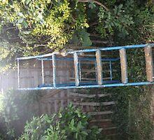 Ladder by Maisie Brennan