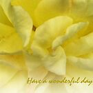 Yellow Rose Keepsake by sarnia2