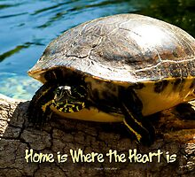 Home is Where the Heart is by Bevin Allison