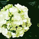 Hydrangea by MaggieGrace