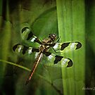 Dragonfly by Barbara Zuzevich