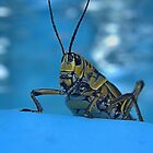 Pool Side Grasshopper by HeavenlyCanvas