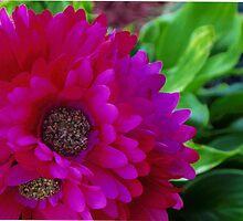 In Full Bloom, by B00N by B00N
