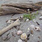 Rustic; Thornton Beach, Bay of Plenty, New Zealand by Amaterasu