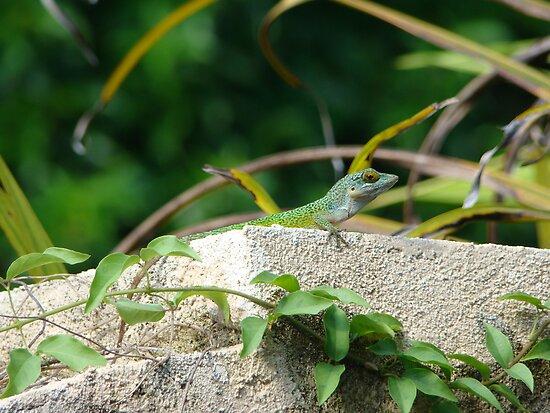 The Gatekeeper, Warwick Lizard, Bermuda by Amaterasu