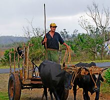 Ox drawn cart, Vinales, Cuba by buttonpresser