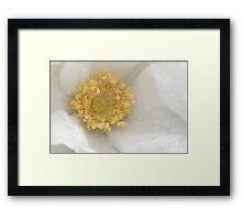 Silent heart meditation - white rose  Framed Print