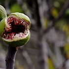 Little shop of Horrors by DJGPhoto