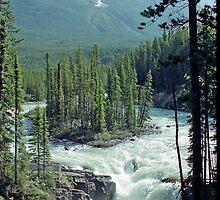 Sunwapta Falls, Jasper National Park, Alberta, Canada by Adrian Paul