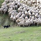 Shifting the sheep by Enivea