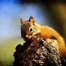 Baby Squirrel 2 by Teresa Zieba